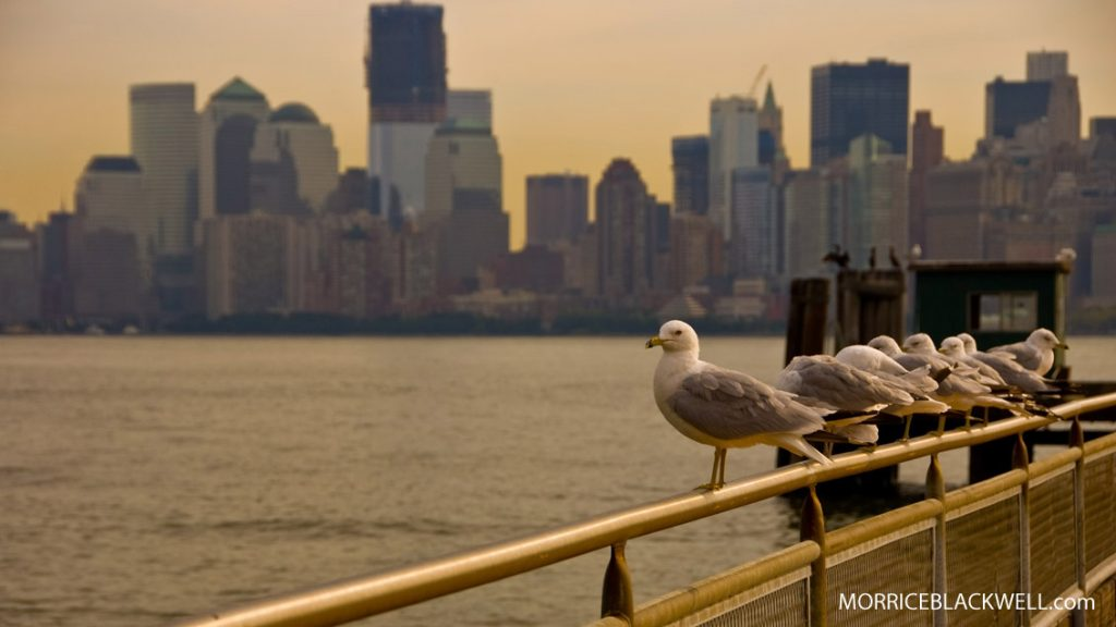 New York City Birds - Liberty Island - New York, New York