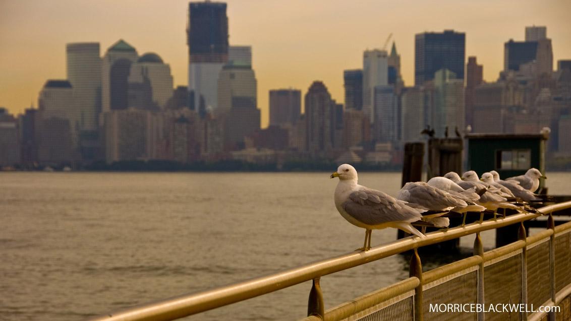 New York City Birds - Liberty Island - New York, New York